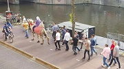 kameel vrijgezellen feest max 2 kol  kosteloos